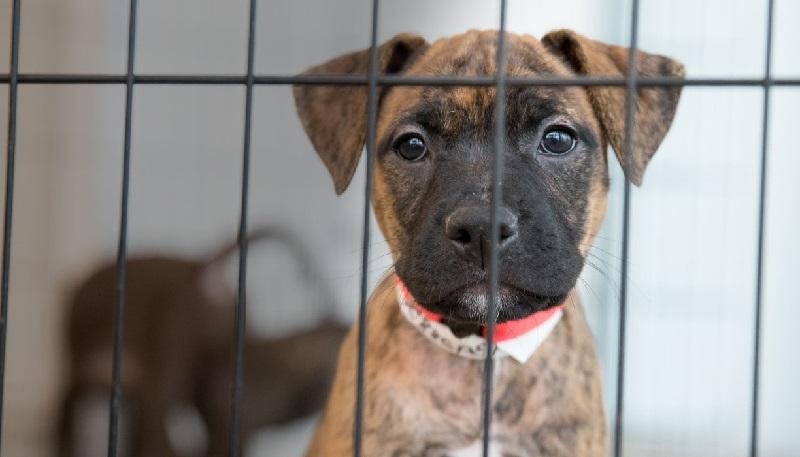 Aprovado projeto que proíbe sacrifício de cães, gatos e aves pela zoonoses