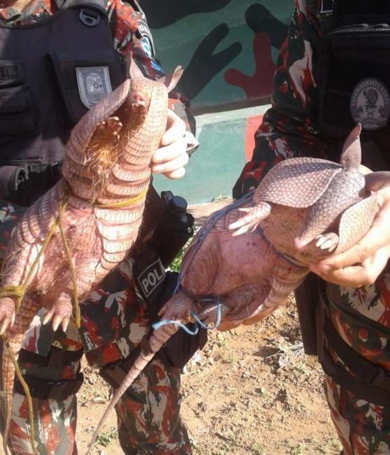 Polícia Militar apreende animais ameaçados de extinção no Piauí
