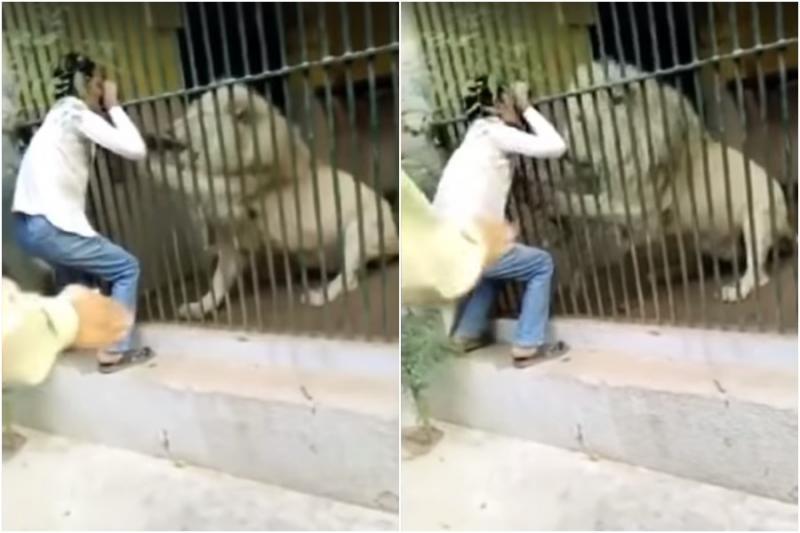 Vídeo: Leão ataca tratador em zoológico e quase arranca seu braço