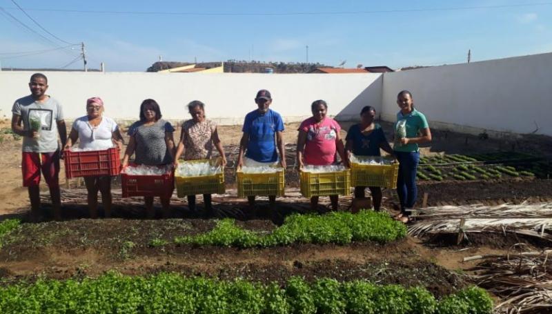 Projeto Horta Comunitária gera renda para dezenas de famílias em Oeiras