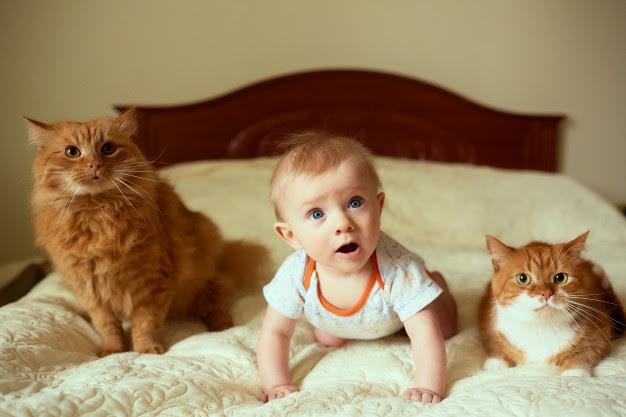 PETS: Os mitos sobre gatos e gestantes