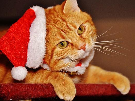 Saiba o que pode e não pode oferecer ao seu pet na Ceia de Natal