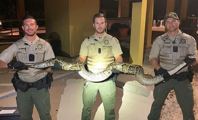 Cobra gigante é morta após invadir casa e assustar família
