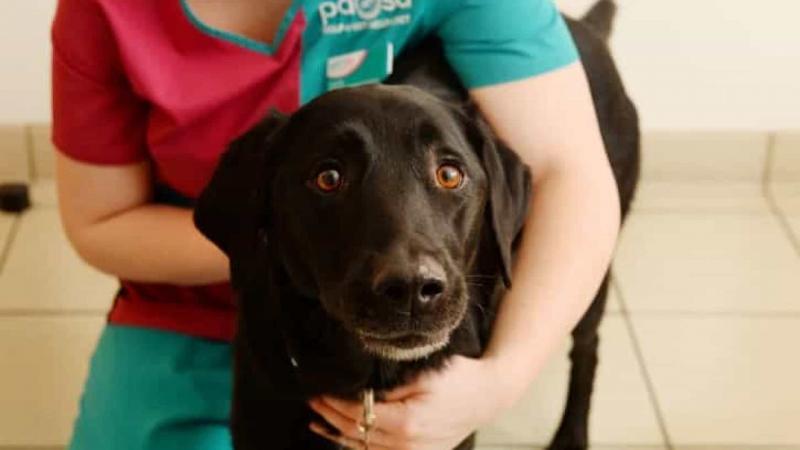 Cão é operado de urgência após comer mais de 30 enfeites de Natal