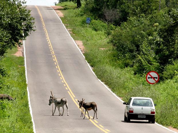 Animais na BR-135 oferecem risco aos motoristas de Gilbués e Região
