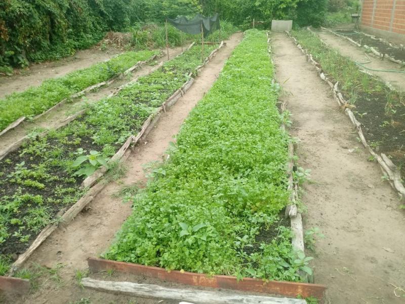 Prefeitura de Regeneração começa produção de plantas frutíferas