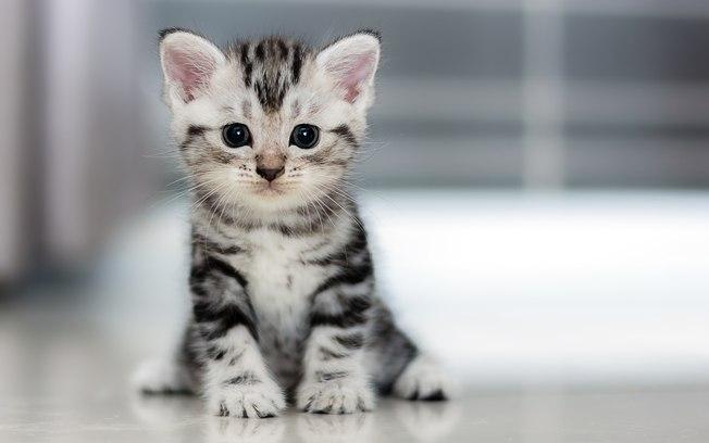 Conheça as fases de vida do gato e o comportamento característico de cada