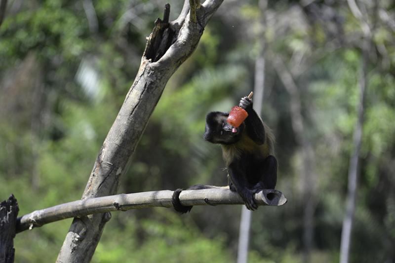 Secretaria esclarece relação de mortes de macacos com febre amarela no Piauí