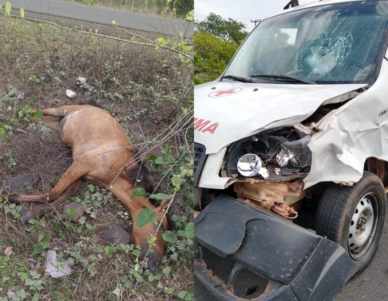 Ambulância colide em animal na PI-113 entre Barras e Cabeceiras