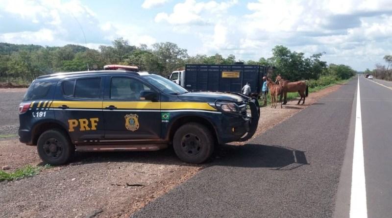 PRF inicia operação de apreensão de animais no Piauí