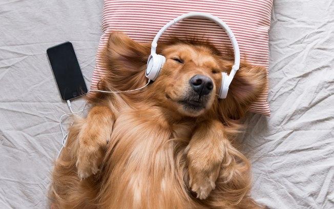 Spotify lança listas de músicas para acalmar animais de estimação