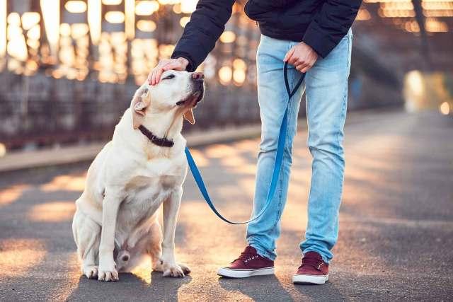 Como passear com o cão que late pra tudo? Veja as dicas