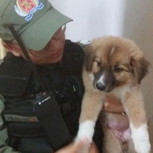 Bandidos furtam objetos e cachorro de residência no Piauí