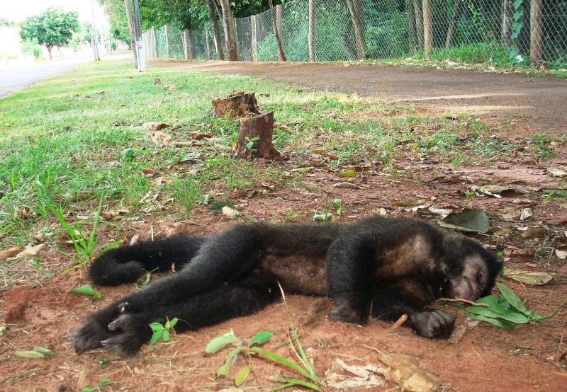 FMS alerta que animais achados mortos devem ser comunicados à Zoonoses