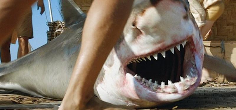 Tubarões que andam são descobertos na Austrália