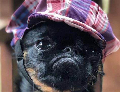 Cão 'mais mal-humorado do mundo' vira celebridade na internet
