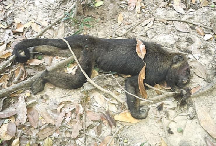 FMS informa resultado de exame de macaco achado morto às margens da BR 316