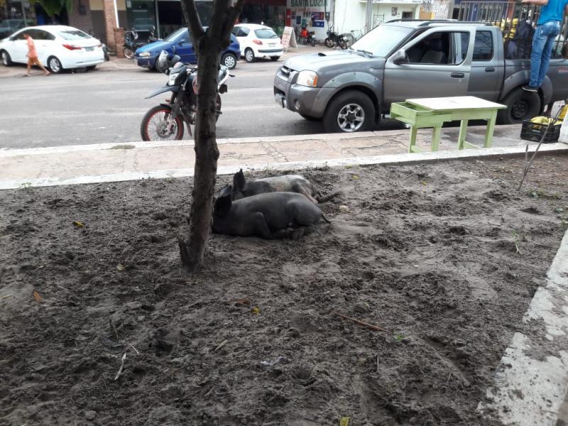 Descaso continua em praça de José de Freitas.