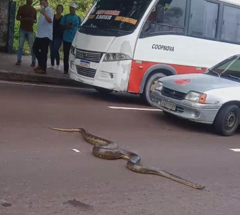 Sucuri de 5 metros tenta 'atravessar' rua e para trânsito em avenida