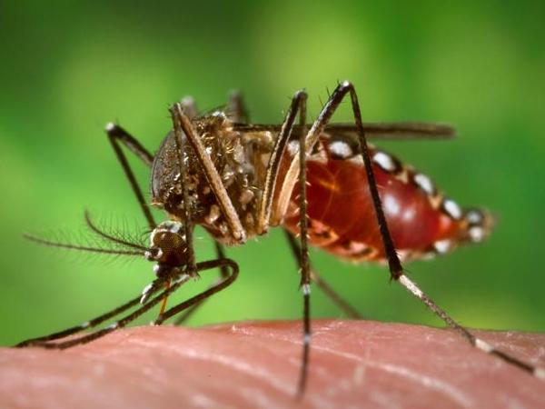 Brasil registra 130 casos de febre amarela até 23 de janeiro