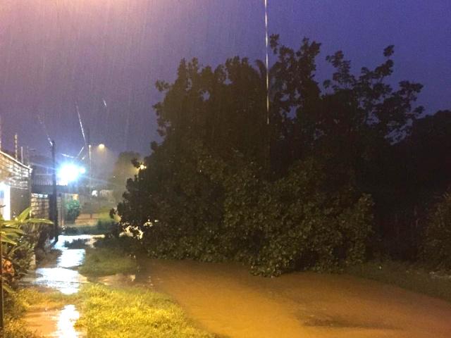Chuva em José de Freitas causa queda de árvore de grande porte.