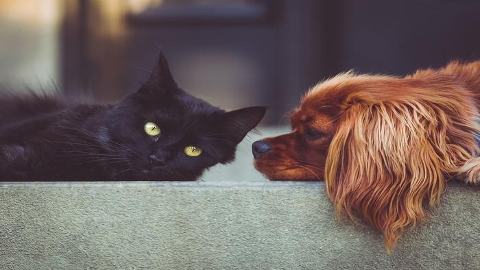 Saiba se cães e gatos podem contrair coronavírus