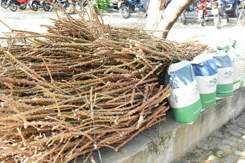 Secretaria de Desenvolvimento Rural realiza entrega de produtos biofortificados