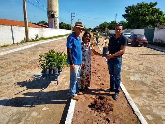 Arborização das vias públicas de Colônia do Gurgueia