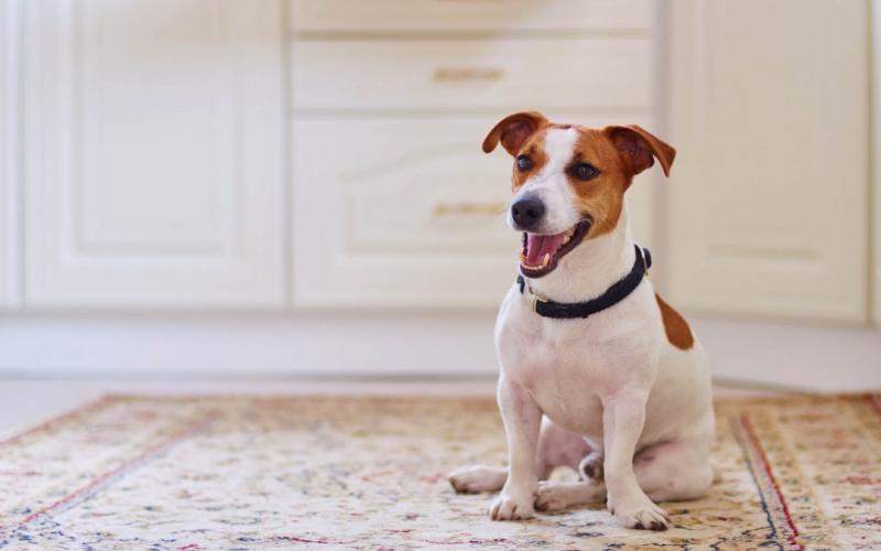 Confira 7 dicas para manter a saúde do seu pet em dia