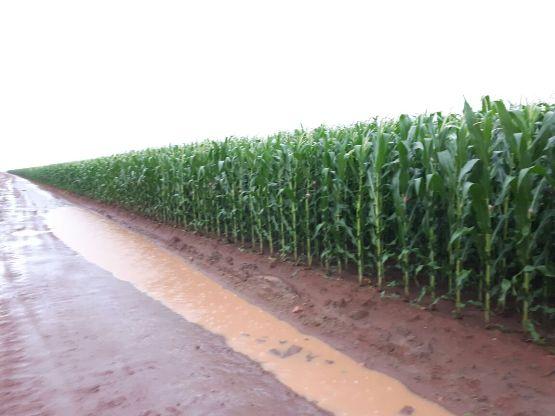 Clima favorável no sul do Piauí deve aumentar rendimento médio da soja e do milho