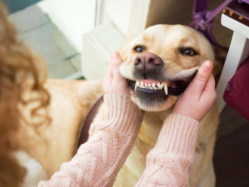 1 em cada 4 cães tem fraturas dentárias por mastigar produtos duros