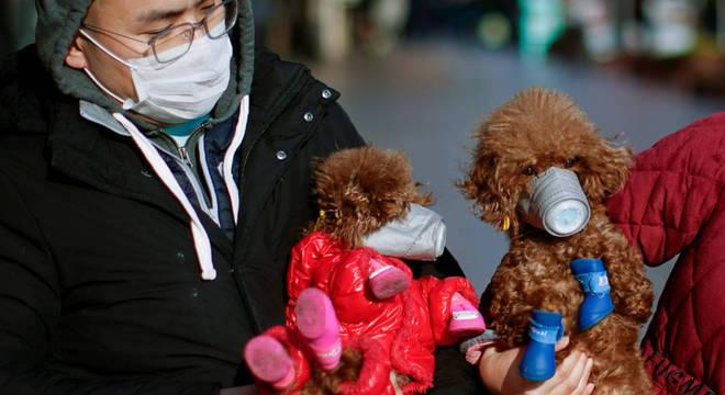 Cão apresenta teste positivo para coronavírus e vai para quarentena