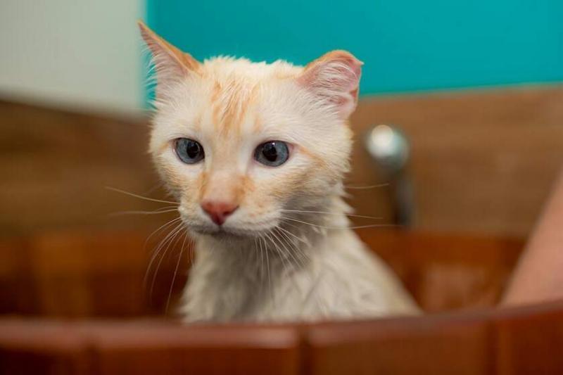 Saiba como tratar a remela excessiva nos olhos dos animais