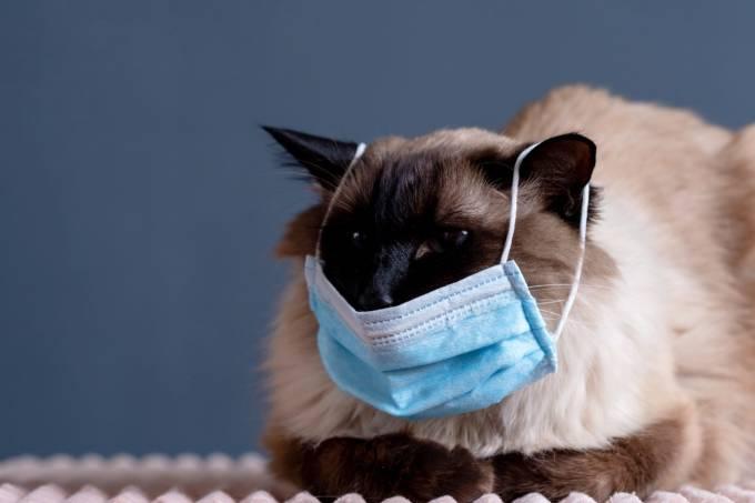 Primeiro caso: gato é infectado por coronavírus na Bélgica