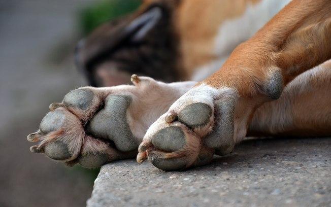 Morador de rua surta e mata cachorro estrangulado