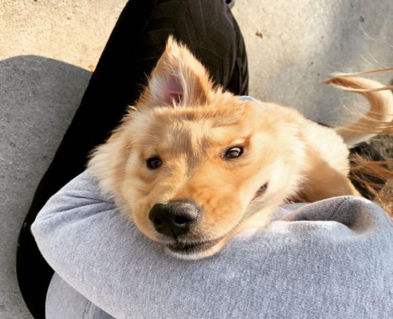 Conheça Rae, o cão unicórnio