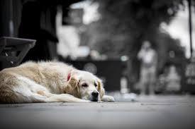 Pet perdido: veja sete dicas para ajudar a encontrar o animal
