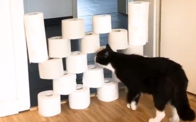 Desafio do papel higiênico com pets faz sucesso nas redes