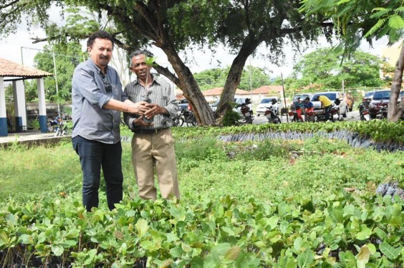 Agricultores familiares recebem mudas de caju do tipo anão-precoce