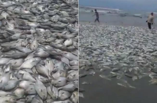 Milhares de peixes mortos surgem sobre areia de praia deserta
