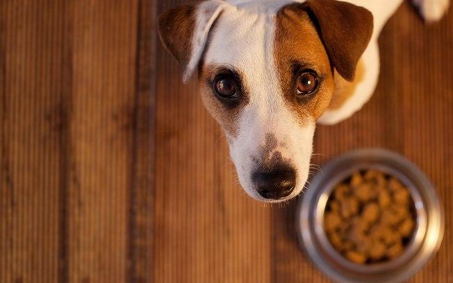 Alimentação correta ajuda a evitar o problema de tártaro em pets