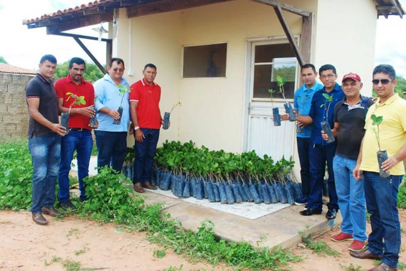 Secretaria de Agricultura municipal de Pedro Laurentino distribui mudas de caju
