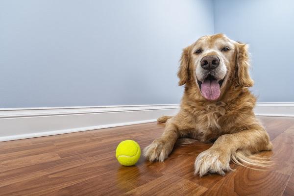 Confira como ensinar novos truque para cães idosos