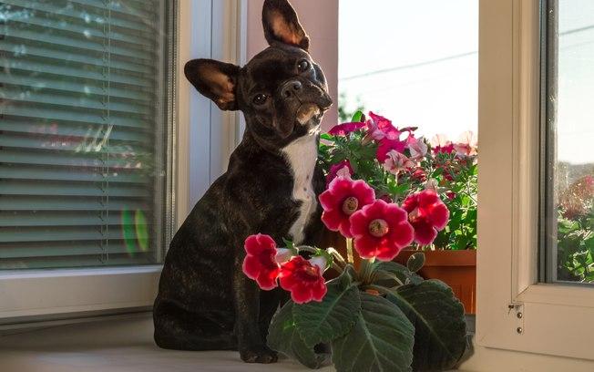 Como saber se a planta que decora a casa é venenosa para animais
