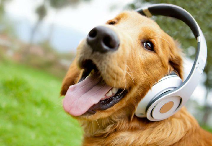 Veja como a música e a TV podem ajudar a manter a saúde mental do pet