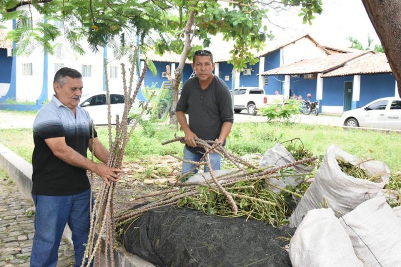 Definida a entrega de mudas de batata-doce biofortificada para o pequeno produtor rural de Floriano