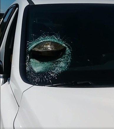 Motorista quase é decapitada por tartaruga que bateu no para-brisa