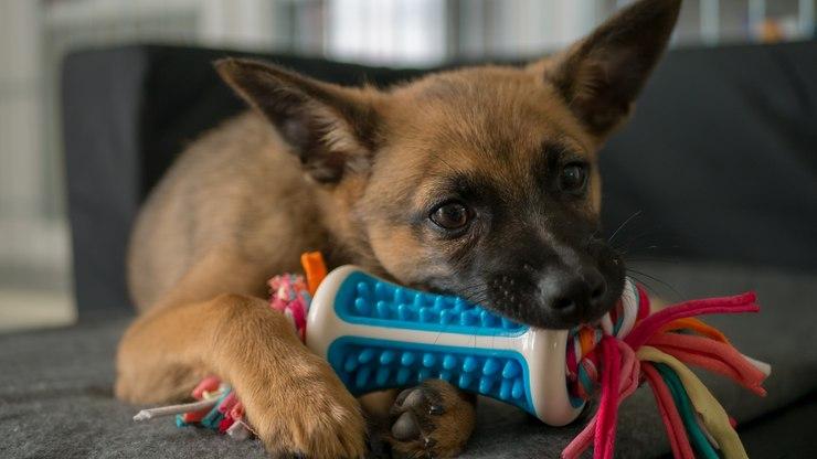 Saiba quais brinquedos improvisados são perigosos para seu pet