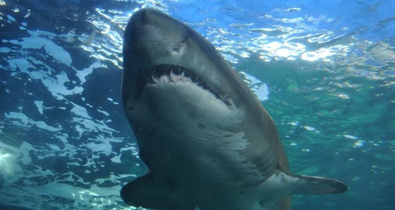 VÍDEO mostra momentos de terror após tubarão perseguir jovens