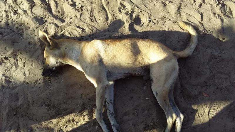 População denuncia mortes de animais por envenenamento em Beneditinos